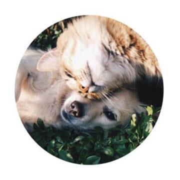 veterinarski izdelki lekarna mačkovec